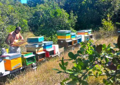 Controllo dell'arnie della api e trattamenti biologici
