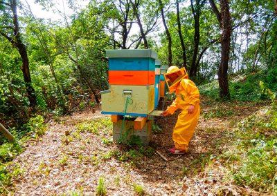 I bambini e le api in totale sicurezza