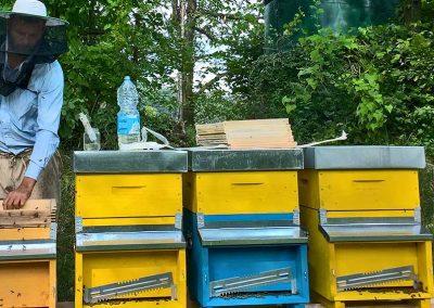 Trattamenti naturali sostenibili per il benessere delle api