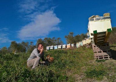 Apicoltura nomade, gli apiari con le famiglie pronti alla transumanza stagionale