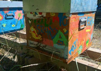 Didattica e apicoltura per ragazzi e giochi per bambini (dipingi la tua arnia) per conoscere le api e il miele